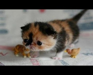 Cute is Not Enough - Funny Cats and Cute Kittens Videos #15 - cute is not enough funny cats and cute kittens videos 15