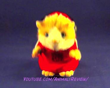 DJ Hamster - Talking Hamster Toy - Repeats Back What I Said and Dances So Funny - dj hamster talking hamster toy repeats back what i said and dances so funny