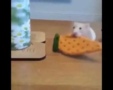 Dog steals hamster cookie - dog steals hamster cookie