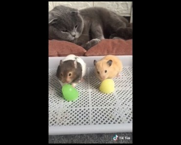 Funny Adorable & Cute Animal-Compilation 2018 (5) - funny adorable cute animal compilation 2018 5