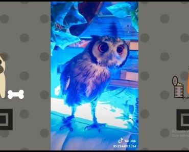 Funny Curious Owl | NEW Funny and cute Animal-Compilation | 2018 P.2 - funny curious owl new funny and cute animal compilation 2018 p 2