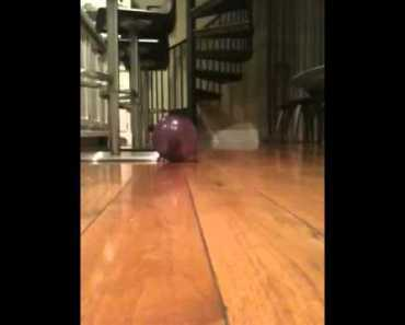 Funny hamster crash - funny hamster crash