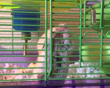 FUNNY HAMSTER FAIL!!!! &25hf4hs - funny hamster fail 25hf4hs