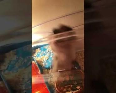 FUNNY HAMSTER FALLING - funny hamster falling