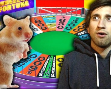 Gavin's Dumb Little Hamster in Wheel of Fortune | Achievement Hunter Highlight - gavins dumb little hamster in wheel of fortune achievement hunter highlight