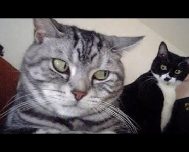 Guilty Cats - Funny Animal Videos Compilation 2018 [CUTE] - guilty cats funny animal videos compilation 2018 cute