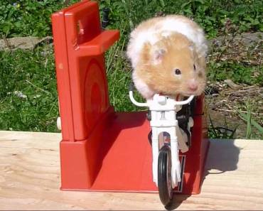 Hammy the Hamster Rides Again - hammy the hamster rides again