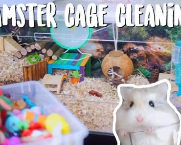 Hamster Cage Cleaning | Roborovski Hamster - hamster cage cleaning roborovski hamster