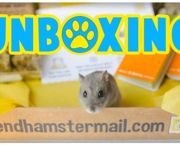Hamster Mail Unboxing | New Monthly Subscription Box Service! *Early Bird Box Not June Box* - hamster mail unboxing new monthly subscription box service early bird box not june