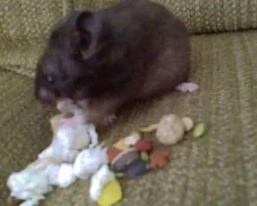 Hamster Spitting Out Food - hamster spitting out food