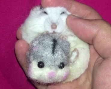 It's Bedtime for this Happy Hamster! - its bedtime for this happy hamster