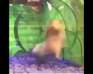Lil hamster - lil hamster