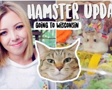 No More Hamster Room | Hamster Updates - no more hamster room hamster updates
