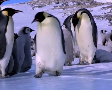 Penguin Fail - Best Bloopers from Penguins Spy in the Huddle (Waddle all the Way) - penguin fail best bloopers from penguins spy in the huddle waddle all the way