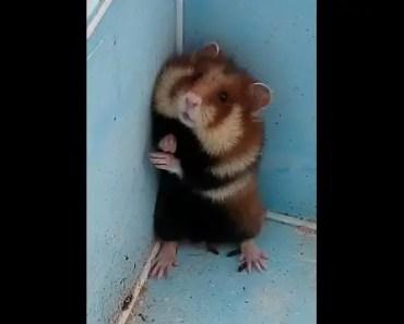 Poor little hamster I found in Shrek´s swamp (was saved) - poor little hamster i found in shreks swamp was saved