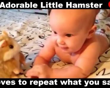 Talking Hamster Toy - talking hamster toy