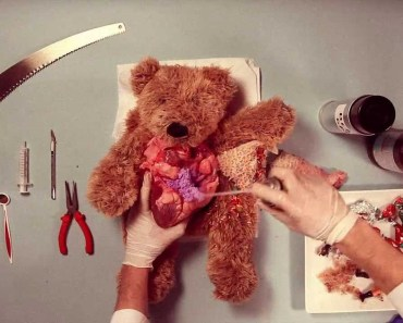 Teddy Has An Operation - teddy has an operation