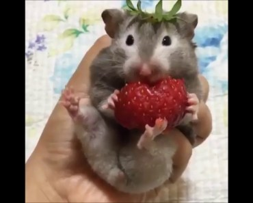 The Sweetest Baby Ever - Top Funny Animals - the sweetest baby ever top funny animals