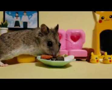 This Chinese Hamster is the Absolute Cutest [Cute Hamster Vid] - this chinese hamster is the absolute cutest cute hamster vid