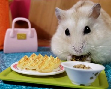 Tiny Dwarf Hamster Camps Out In His Living Room [cute pet vids] - tiny dwarf hamster camps out in his living room cute pet vids