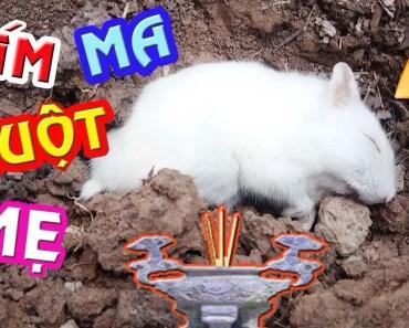 Tony | Vĩnh Biệt Mẹ Hamster & Bầy Chuột Con Mồ Côi - Hamster Die - tony vinh biet me hamster bay chuot con mo coi hamster die