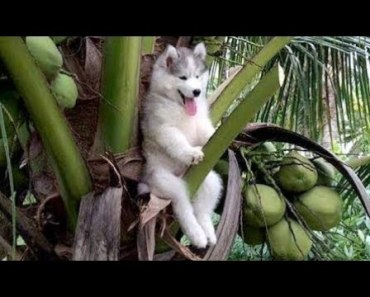 WATCH THESE ANIMALS and you will LAUGH ALL DAY - Funny ANIMAL compilation - watch these animals and you will laugh all day funny animal compilation