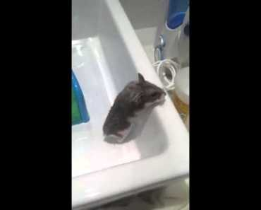 weird noise hamster worried - weird noise hamster worried