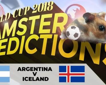 World Cup 2018 Hamster 'Predictions': Argentina v Iceland - world cup 2018 hamster predictions argentina v iceland