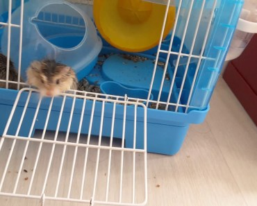 Funny hamster - 1532086322 funny hamster