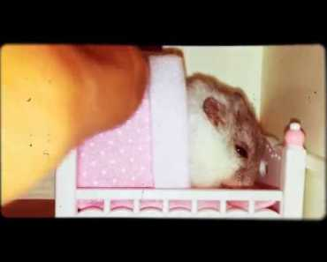 A Cute Hamster trying to sleep - a cute hamster trying to sleep
