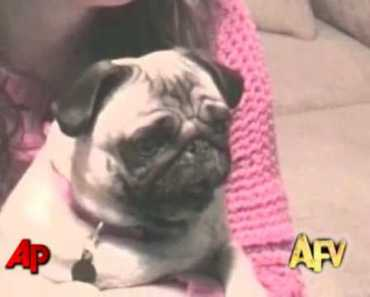 """""""America's Funniest Home Videos"""" Animal Clips - americas funniest home videos animal clips"""
