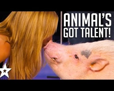 ANIMALS Got Talent Compilation! The Most Intelligent & Cleverest From Around The World! - animals got talent compilation the most intelligent cleverest from around the world