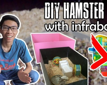 DIY Hamster Cage with Infraboard! Murah dan Berkualitas! (Tutorial) - diy hamster cage with infraboard murah dan berkualitas tutorial