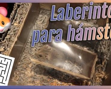DIY Laberinto para Hámsters | Tutorial juguete casero - diy laberinto para hamsters tutorial juguete casero