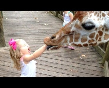 FORGET CATS! Funny KIDS vs ZOO ANIMALS are WAY FUNNIER! - TRY NOT TO LAUGH - forget cats funny kids vs zoo animals are way funnier try not to laugh