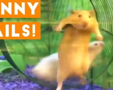 Funniest Animal Fails January 2018 Compilation | Funny Pet Videos - funniest animal fails january 2018 compilation funny pet videos