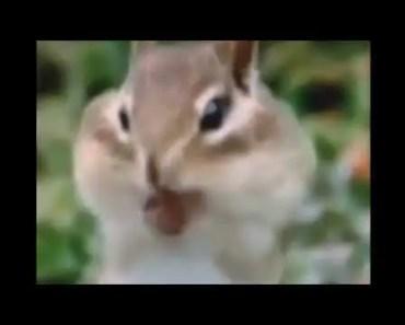 Funny hamster beat box - funny hamster beat