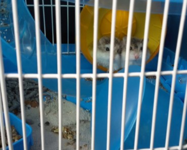 Funny hamster(1) - funny hamster1