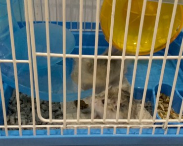 Funny hamster(3) - funny hamster3