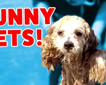 Funny Pets & Animal Bloopers, Clips, Reactions & Outtakes of 2016 Weekly Comp   Funny Pet Videos - funny pets animal bloopers clips reactions outtakes of 2016 weekly comp funny pet videos