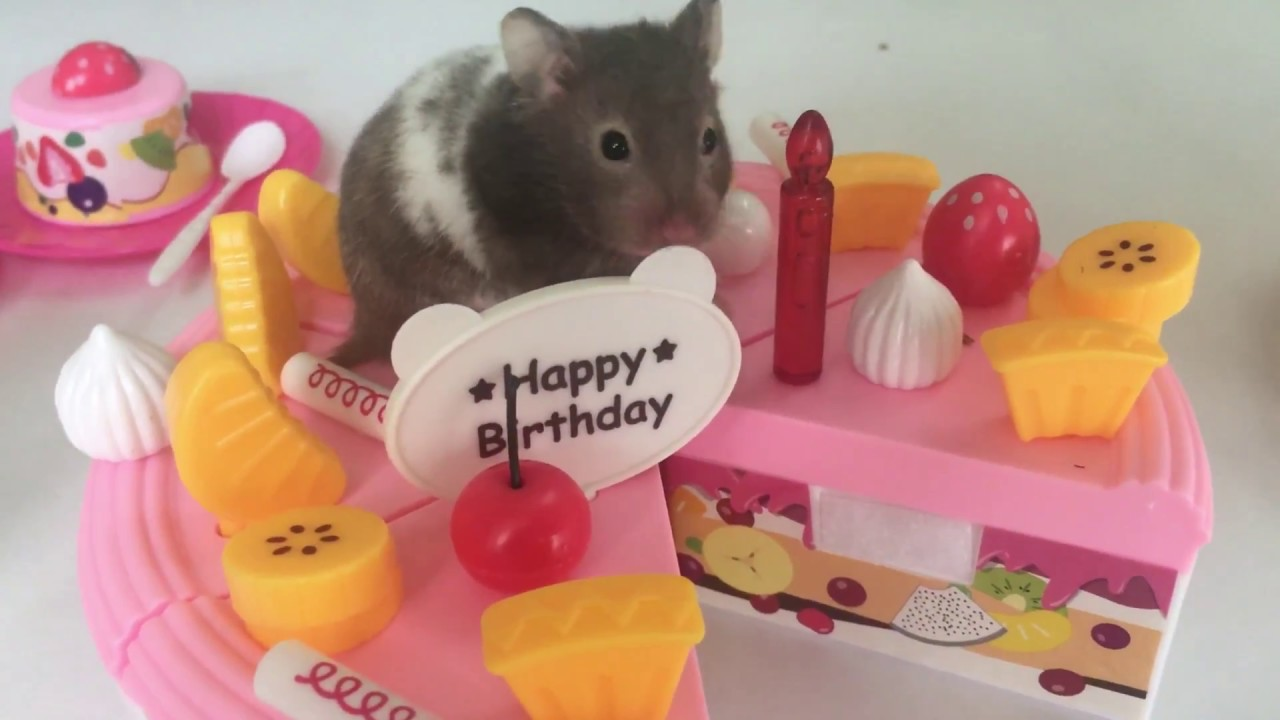 Great Toy For Kids Party And Play With Baby Hamster Try To Take