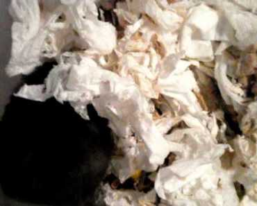 Hamster chirping. - hamster chirping