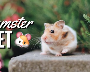 Hamster Diet | What to feed your pet hamster | Syrians + Dwarfs - hamster diet what to feed your pet hamster syrians dwarfs