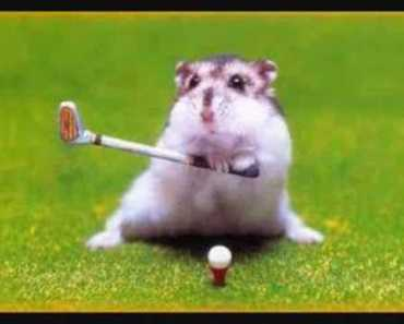 HAMSTER FUNNY PICTURE - hamster funny picture