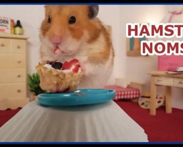 HAMSTER NOMS! Hamster 4th of July - hamster noms hamster 4th of july