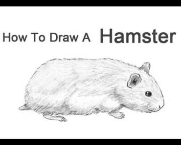 How to Draw a Hamster - how to draw a hamster