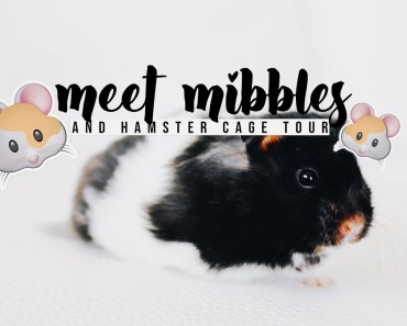 MEET MY NEW HAMSTER (CAGE TOUR) - meet my new hamster cage tour