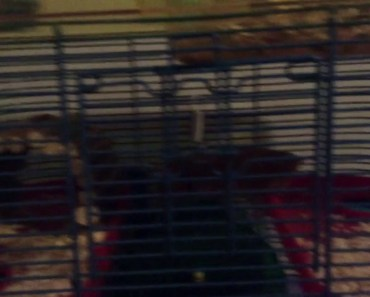 My hamster is funny - my hamster is funny