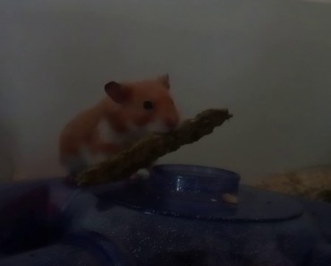 My stupid but funny hamster - my stupid but funny hamster