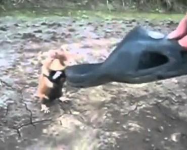 Ninja Hamster Funny - ninja hamster funny